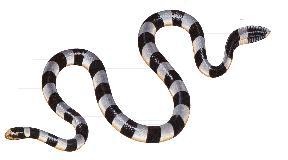 Serpent tricot rayé reunion